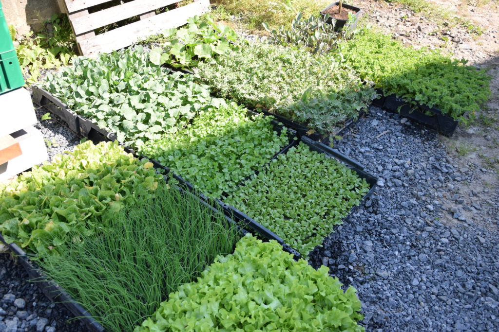 Plants Arche en terre et plants maison.